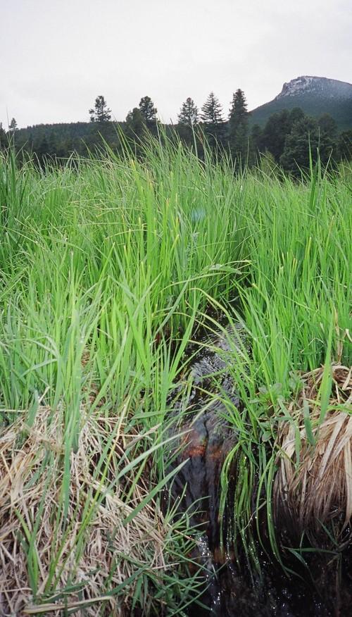 Grassy_creek