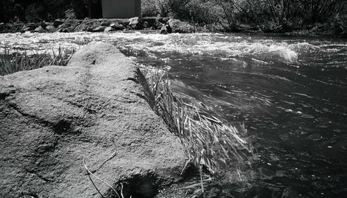 The_river